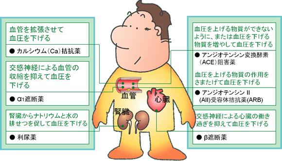 カルシウム(Ca)拮抗薬:血管を拡張させて血圧を下げる α1遮断薬:交感神経による血管の収縮を抑えて血圧を下げる 利尿薬:腎臓からナトリウムと水の排せつを促して血圧を下げる アンジオテンシン変換酵素(ACE)阻害薬:血圧を上げる物質ができないように、または血圧を下げる物質を増やして血圧を下げる アンジオテンシンⅡ(AⅡ)受容体拮抗薬(ARB):血圧を上げる物質の作用をさまたげて血圧を下げる β遮断薬:交感神経による心臓の動き過ぎを抑えて血圧を下げる